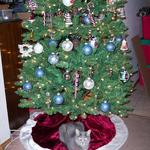 Smokie and tree.jpg