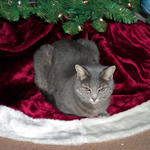 Smokie and tree1.jpg